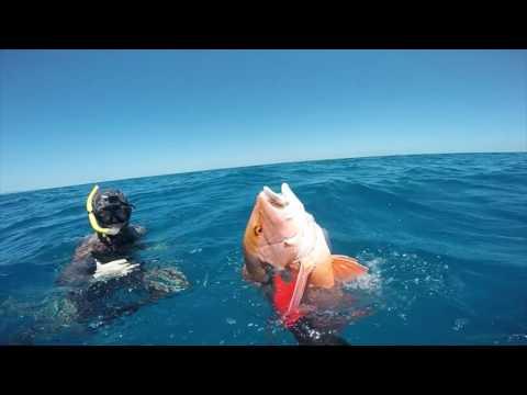 Spearfishing far North Queensland