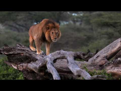Ndutu Safari Lodge, Ngorongoro Conservation Area, Tanzania
