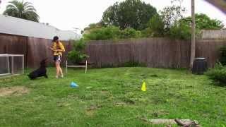 Doberman Obedience In Drive | Easy Dog Training Tips