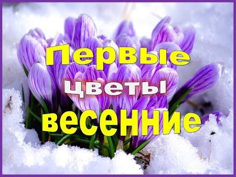 все клипы Александр Дюмин -