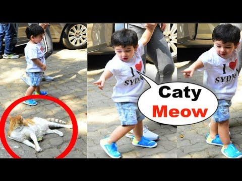 Taimur Ali Khan CUTE VIDEO Playing With Cat