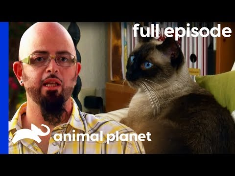 My Cat Hates My Boyfriend! | My Cat From Hell (Full Episode)