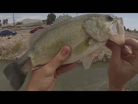 el paso bass fishing youtube
