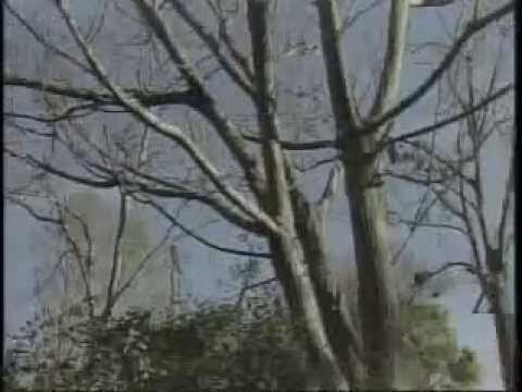 Leprechaun found in tree in Mobile, Alabama (2006)