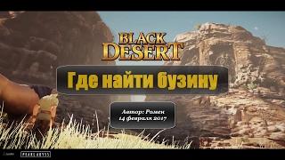 Где найти бузину в Black Desert