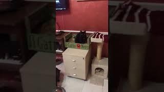 Cena alla Cat Base