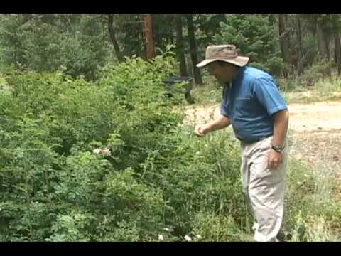 Nature Walk - Discovering medicinal uses of wild plants in Colorado