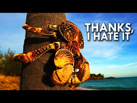 Coconut Crab: Your Worst Nightmare