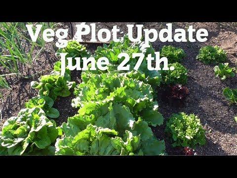 Allotment Diary : Veg Plot, Polytunnel & Greenhouse Gardening Update