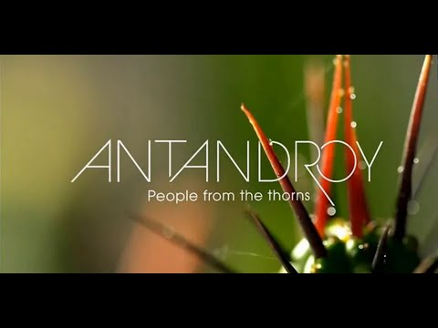 ANTANDROY by F-ONE