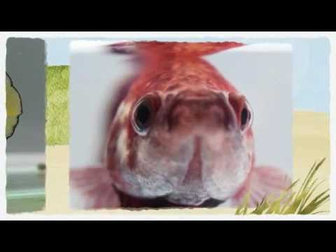 Cool betta fish pictures youtube for Cool betta fish names