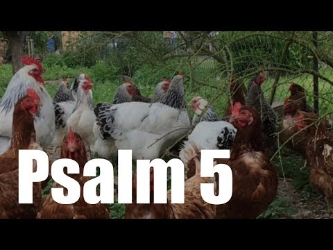 Psalm 5 - Morgengebet Um Beistand