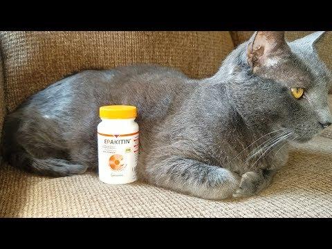 Kidney Medicine for Thunder - Vetoquinol Epakitin for Cats and Dogs