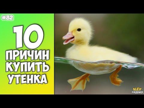10 GRÜNDE KAUFEN ENTLEIN - Interessante Fakten!