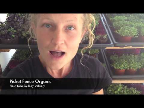 Meet Picket Fence Organic: Delivering Microgreens Sydney wide