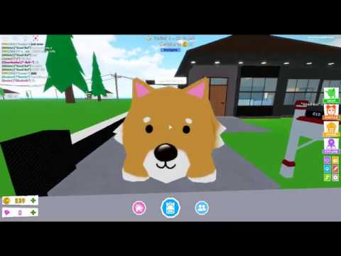 How To Be A Stormtrooper In Robloxian Highschool Youtube Robloxian Highschool Tutorials How To Make A Corgi In Robloxianhighschool Ep 1 Youtube
