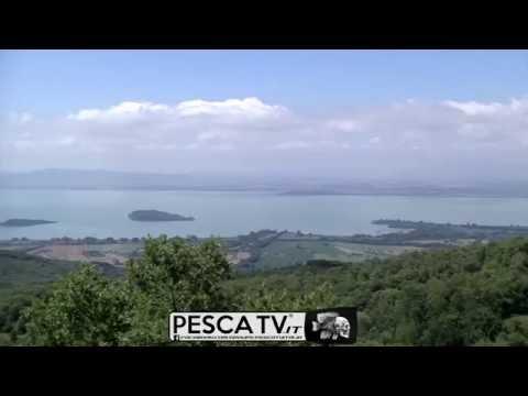 Come Pescare Con Il Pasturatore Sul Lago Trasimeno, In Umbria