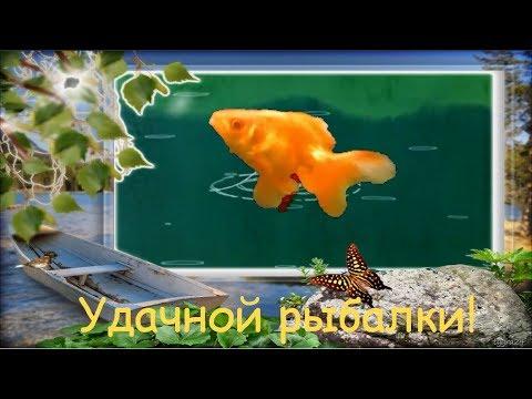 🦈 Удачной рыбалки! Видео-открытка. Пожелание рыбакам от золотой рыбки - Познавательные и прикольные видеоролики