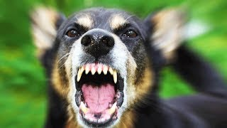 Нападение собак на людей, что делать если напала собака