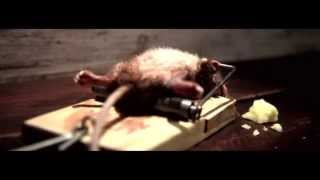Эта крыса попалась в мышеловку  Дальше произошло невероятное