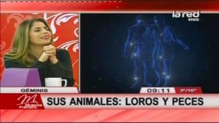 Animales según los signos del zodiaco: Géminis y Cáncer