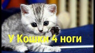 Приколы. Коты против Собак.  У Кошки 4 ноги...(M@tvey)