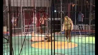 مدربة الاسود والنمور الفنانة / لوبا محمد الحلو