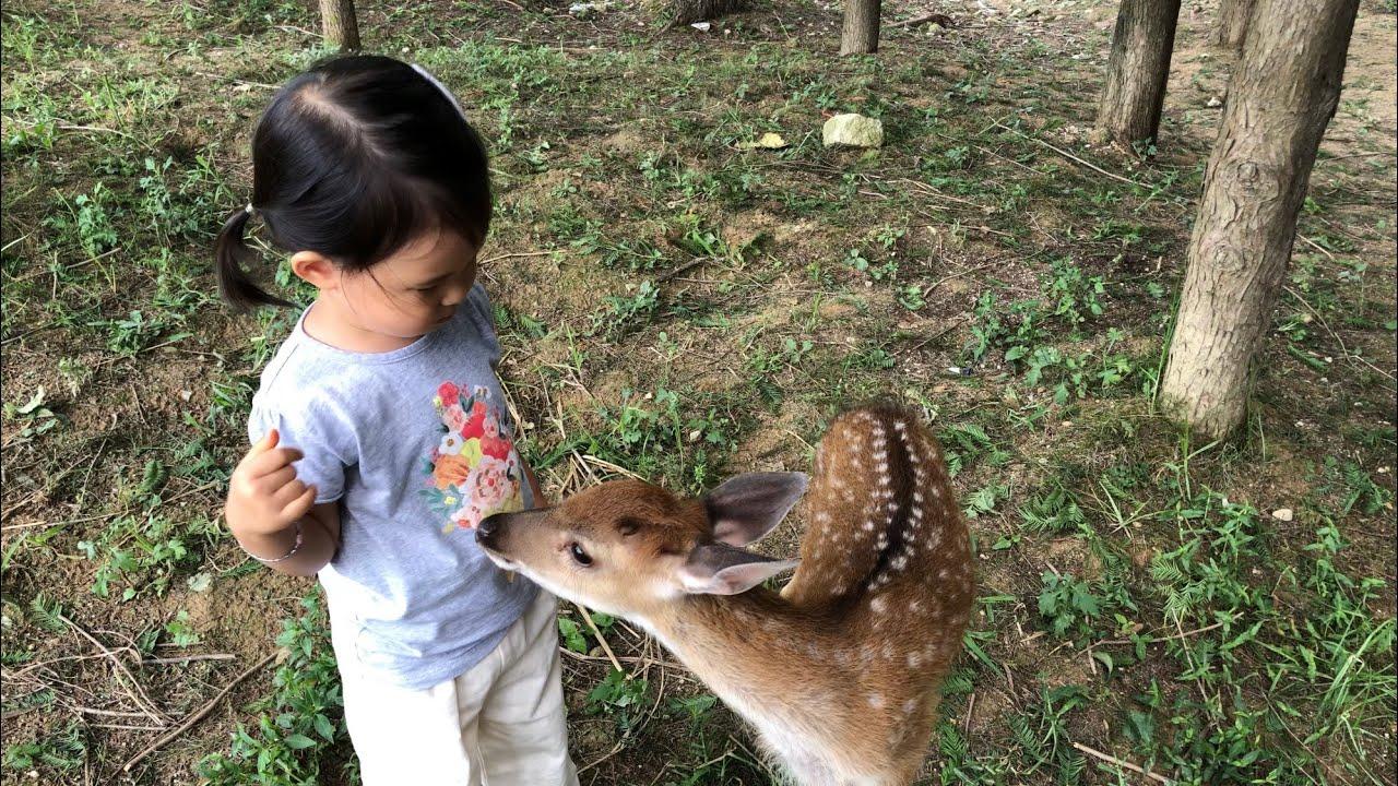 아기사슴이랑 마음껏 놀 수 있는곳