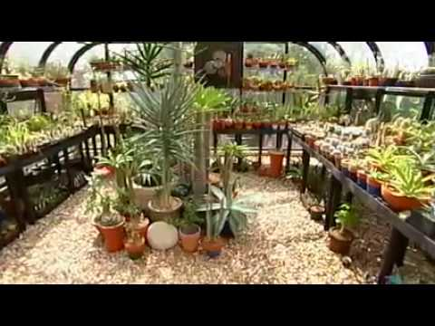 Jeff Pavlat succulent garden design: Central Texas Gardener - YouTube - how to design a succulent garden