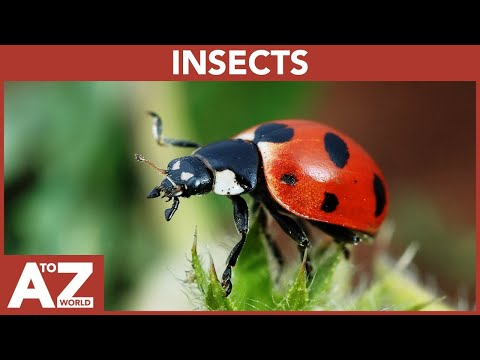 A To Z Of Insects | ABC Of Insects Starting From A To Z