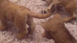 Schleich Love of the Lions episode 1: Meeting The Girls