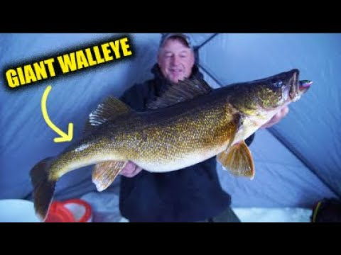 Catching GIANT Bay De Noc Walleyes (Late Ice)