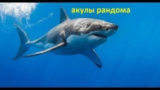 Акулы рандома