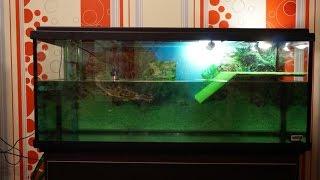 Чистка нашего аквариума, подмена воды!/Cleaning our aquarium, changing water!