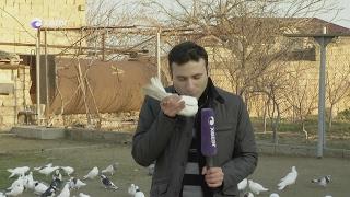 Oyan Azerbaycan-Dostum-Goyercin