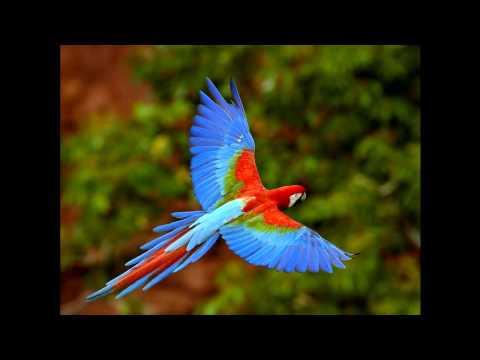 So�ar con aves - Significado de so�ar con p�jaros