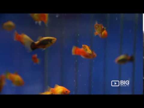 Moorabbin Aquarium An Aquarium Shop In Melbourne Selling Aquarium And Pet Fish