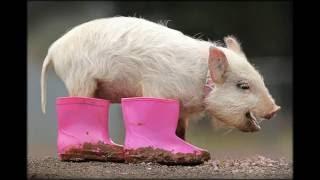 смотреть приколы про животных до слез