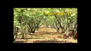 GF Costruzioni Macchine Agricole - La nostra produzione