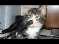 Try to Watch This Without Laughing - Hilarious CAT Fails
