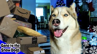 Huskies Open Christmas Gifts from Fans
