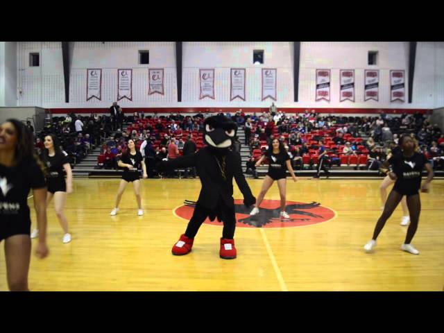 Uptown Funk With Rodney The Raven