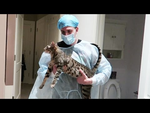 EMERGENCY CAT SURGERY!!!!