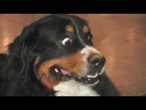 perros graciosos asustados por los pedos