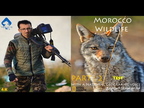 Morocco Wildlife  With a voice Of NatGio Test  - تجربة دمج صوت ناشيونال جيوغرافي