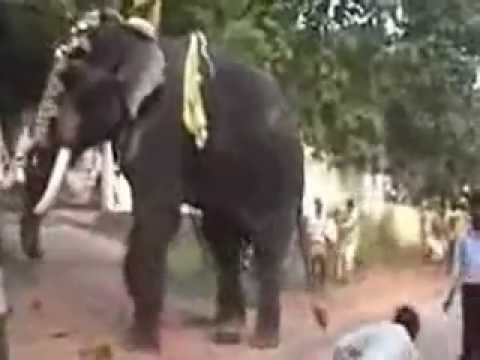 Kerala elephant attack youtube - photo#33