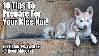 Alaskan Klee Kai: Tips to prepare for AKK puppy