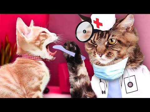 DOCTOR CAT GAMES!