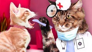 DOCTOR CAT GAMES!