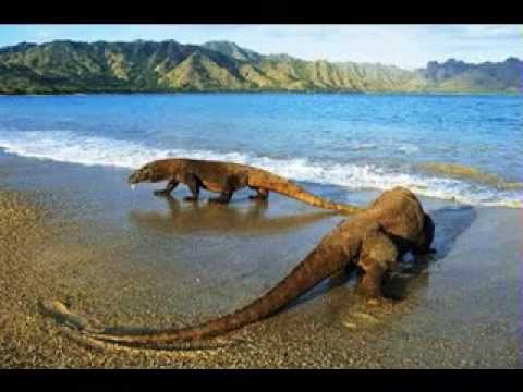Komodo Island, East  Nusa Tenggara, Indonesia - Best Travel Destination